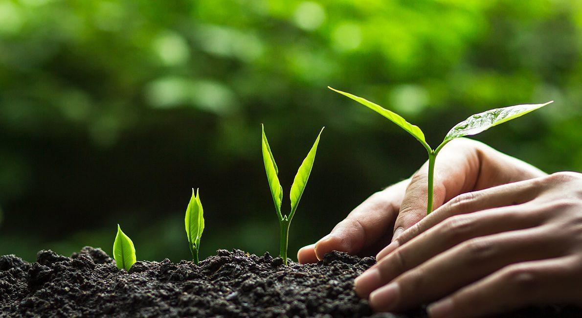 IT-Branchen planter 700 træer