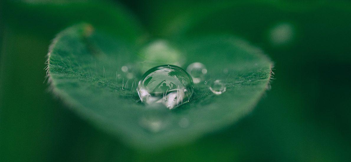 Flere grønne DJØF'ere kan bidrage til en bæredygtig omstilling